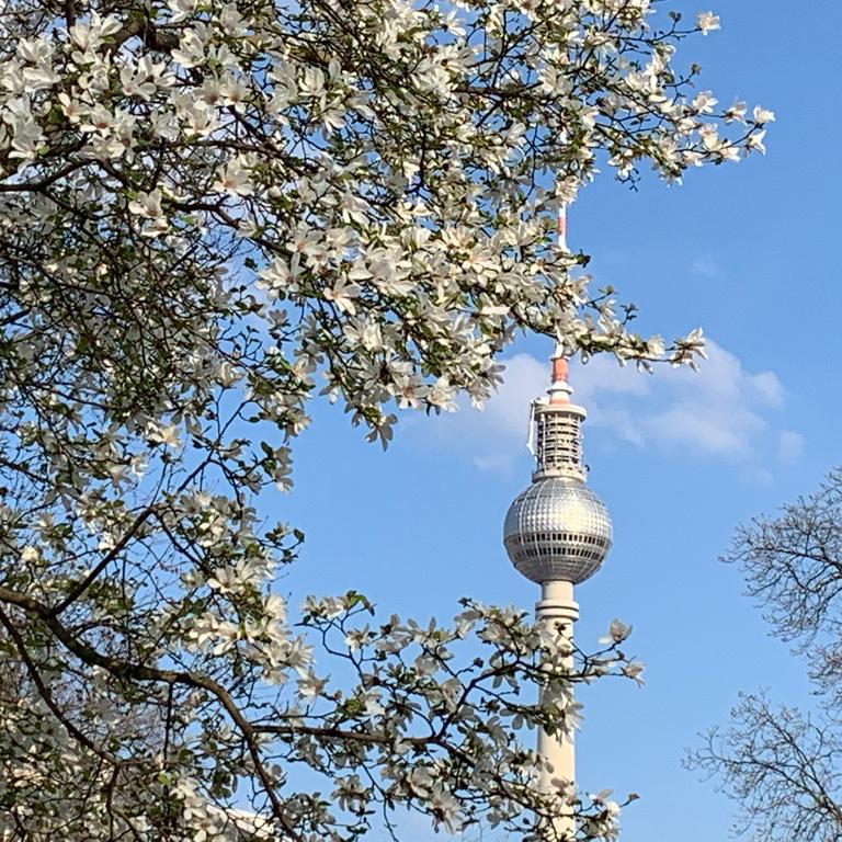 spree-schifffahrt-berlin-berliner-fernsehturm